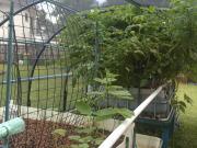 kaesehagen_garden